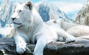 white lion wallpaper hd 1 2560 x 1600