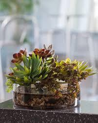creative glass terrarium containers