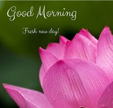 40 Good Morning Flower Images For Free Download HD Pics Custom Goodmorning Unique Images