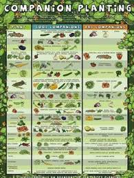 Vegetable Companion Planting Charts Companion Planting Herbs Herbal Academy