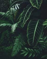 Ipad Wallpaper Plants