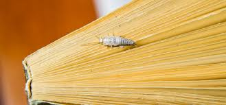 Silverfish Are Not As Harmful As You May Think Ask Mr Little