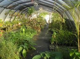 file usf botanical garden3 jpg