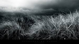 black and white nature wallpaper. Delighful Nature Abstractblackandwhitenaturefieldshdwallpapersjpg On Black And White Nature Wallpaper T
