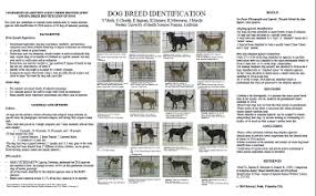 Visual Breed Identification National Canine Research Council