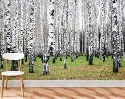 birch trees 2 wall mural