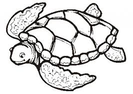 Small Picture Sea Turtle Coloring Pages Coloring Page Coloring Pages For Girls