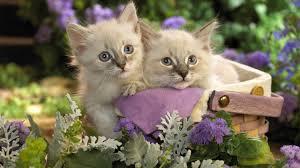 image wallpaper cute pets akr55 jpg