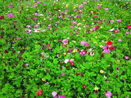 erfly hummingbird wildflower mix