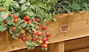 Small Picture Small Vegetable Garden Small Vegetable Garden Ideas