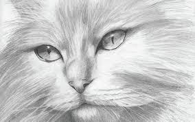 Immagini Adorabili Di Animali Adorabili Disegno A Matita Disegno Arte