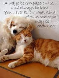 Quotes About Pets And Friendship Mesmerizing Photos Cat And Dog Friendship Quotes Best Romantic Quotes