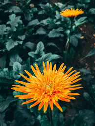 Iphone Hd Wallpapers 1080p Flower ...