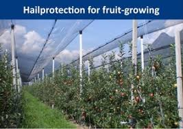 frustar the number 1 of hail protection in orchards