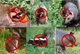 garden animals. Our Garden Fences: Keep Out All Small Animals Above Squirrel Size: Introduction