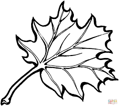 Small Picture Oak and Maple leaves coloring page Free Printable Coloring Pages
