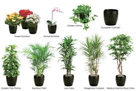 best office plants no sunlight. Best Office Plants No Sunlight P 9 Newfangled While Many Can Benefit From The Regulated Temperature H