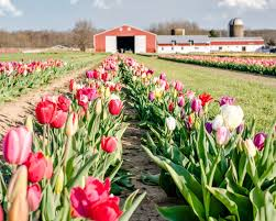 there s nothing quite like spring in new jersey true to its nickname you ll find beautiful cherry blossoms tulip fields rolling hills of pure greenery