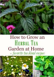 what are your favourite herbal teas to drink grow and make add your favourite herbs and recipes to the conversation in the comments section below