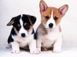 little dogs cute loving dogs s pets wallpapers cute pet