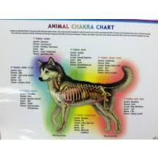 Animal Chakra Chart Animal Chakra Chart Dog