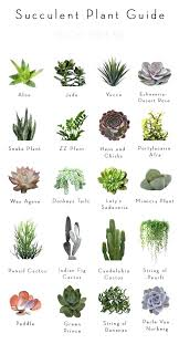 feng shui plant office. Best Plants For Office Stupendous Small Desk Of Feng . Shui Plant