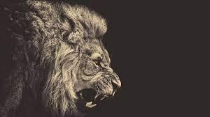 Lion wallpaper ...