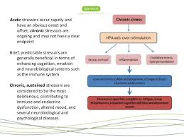 Hpa Axis The Hpa Axis And Neuroinflammation