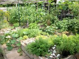 martha stewart and gardenwise on herbs and vines