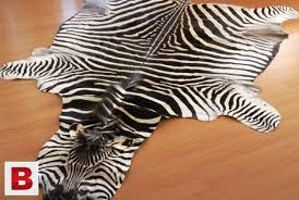 pictures of original zebra hide rug