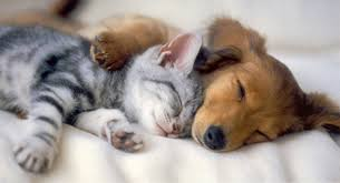 cute puppies and kittens kissing. Fine Puppies Kitten And A Sleepy Puppy Throughout Cute Puppies And Kittens Kissing