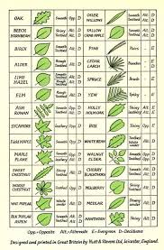 Best 25 Tree Identification Ideas On Pinterest  Identification Fruit Tree Leaf Identification