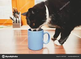 curious cat on the table drinking from mug photo by chalabala