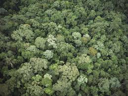 Tropical rainforests grow in the hot, wet, humid places near the equator. Rainforest National Geographic Society
