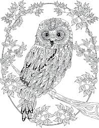 Coloring Pages Adult Free Online Owl For Adults Disney Pdf