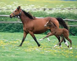 beautiful baby horses wallpaper. Delighful Horses Beautiful Animal 15 Most Beautiful Horse Photos Du0027awwww Look At The Baby Throughout Baby Horses Wallpaper