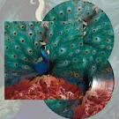 Sorceress [LP]