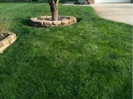 Image For Lawns Details About 50 Lbs Linn Perennial Ryegrass Seed For Lawns Pastures Very Hardy Fast Growing