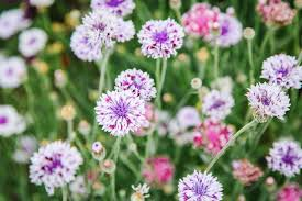 cut flower gardening for beginners