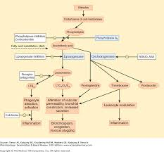 Nsaid Classes Chart Chapter 36 Nsaids Acetaminophen Drugs Used In