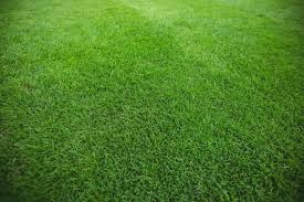 grass field background. Green Grass Field Background Free Photo I