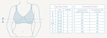 Bust Size And Bra Size Chart The Correct Bra Size Babylonia Baby Webshop