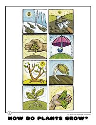 How Do Plants Grow? Plant Life Worksheets for Kids