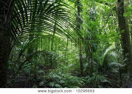 jungle background. Brilliant Jungle Jungle In Background F