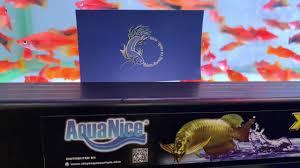 Đèn Led AquaNice Đỏ cá nhưng không đỏ nước - YouTube
