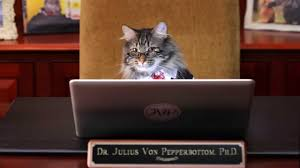 starting a new job life advice from a cat starting a new job life advice from a cat