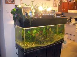 Self Cleaning Fish Tank Garden Aquaponics With Fish Tank Fish For Aquaponics