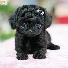 cutest puppy in the world contest. CUTES PUPPIES IN THE WORLD Cutest Puppy In The World Contest Animalsandpets Pinterest Cute Puppies Animals And
