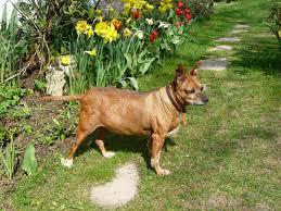 Krankheitsbilder Magen-Darm-Trakt naturheilpraxis für hunde