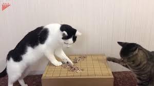 El clásico juego de mesa japonés ahora hasta tu pantalla. Los Gatos Hacen Un Desastre Con Piezas De Juego De Mesa Japones Cgtn En Espanol